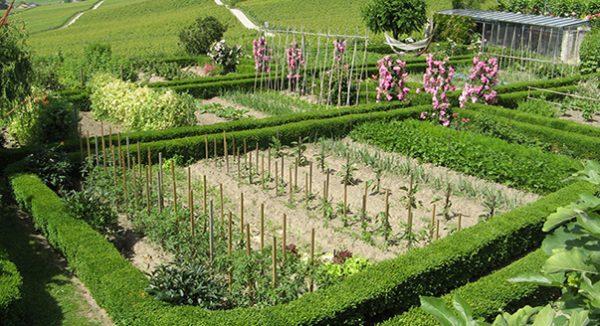 Огород с элементами сада, оформленными своими руками