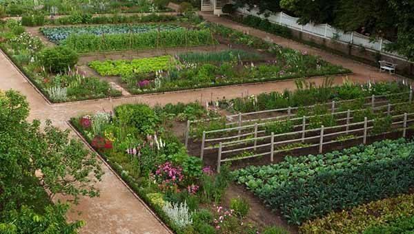 Красивый огород со стильными дорожками