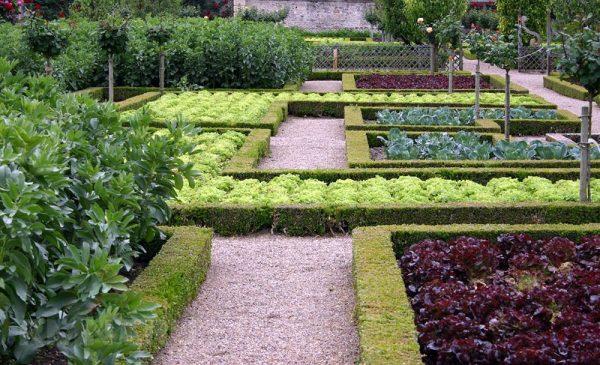 Огород с зеленым окаймлением грядок
