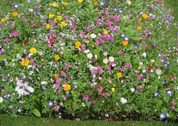 Мавританский газон с цветами разных сортов