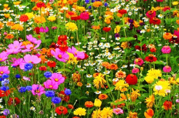 Разноцветный мавританский газон
