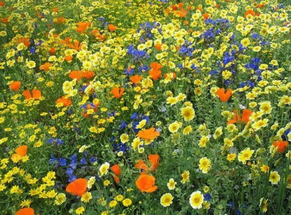 Мавританский газон с цветами