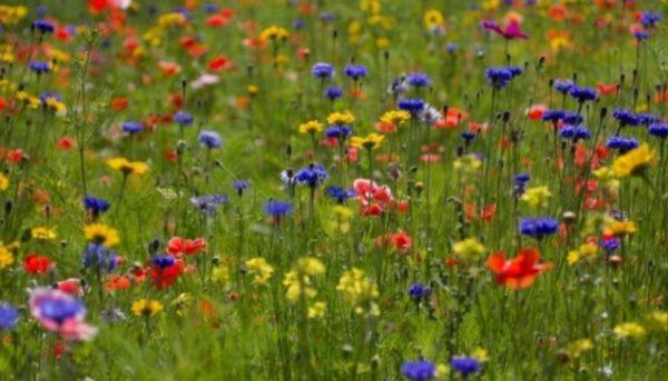 Цветы на мавританском газоне