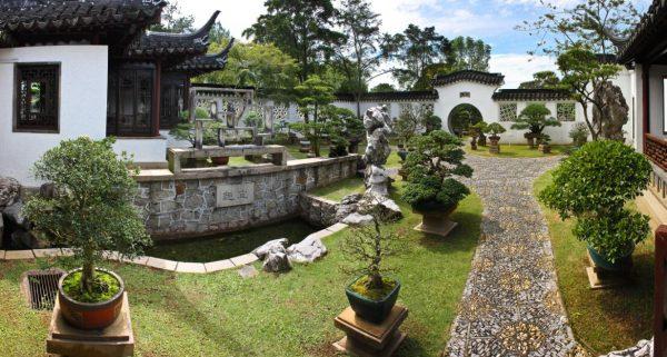 Бонсаи в японском ландшафтном дизайне