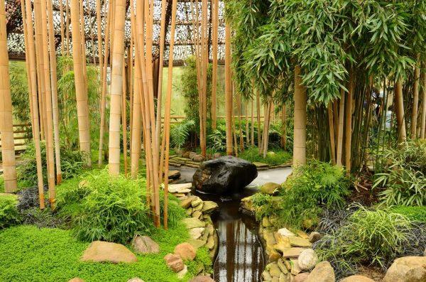 Бамбук в японском ландшафтном дизайне