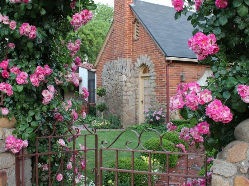 Розы в ландшафтном дизайне — фото