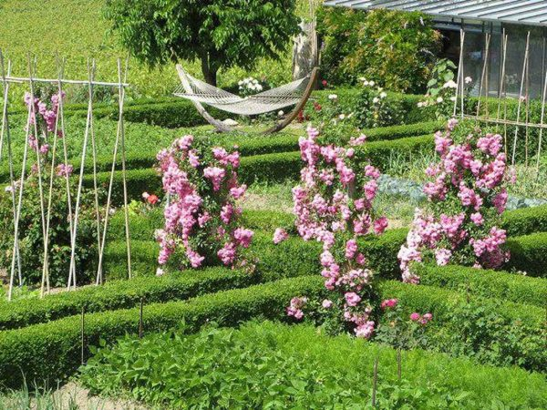 Розы в ландшафтном дизайне