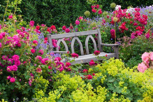 Розы с другими растениями в ландшафтном дизайне