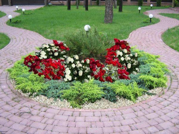 Розы в сочетании с хвойными растениями