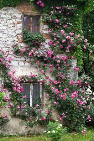 Дом, увитый розами