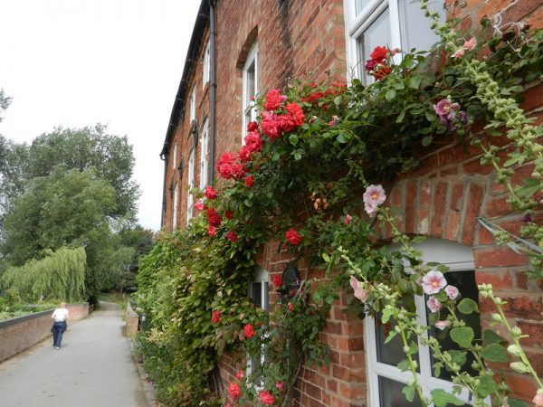 Розы на фасаде