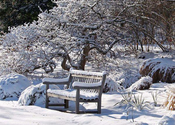 Ландшафтный дизайн зимой