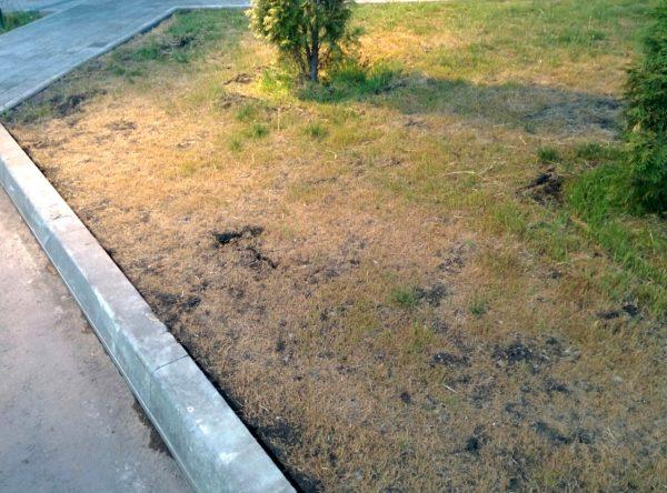 убитый газон