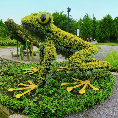 Лягушка из травы