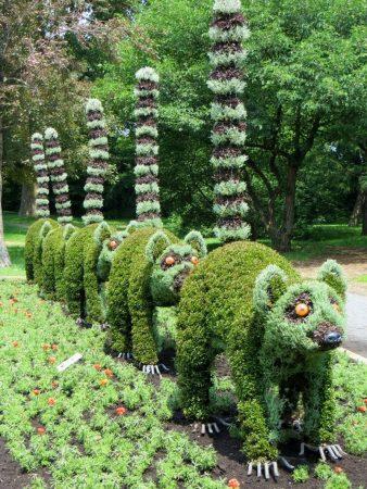 Фигурки енотов из растений
