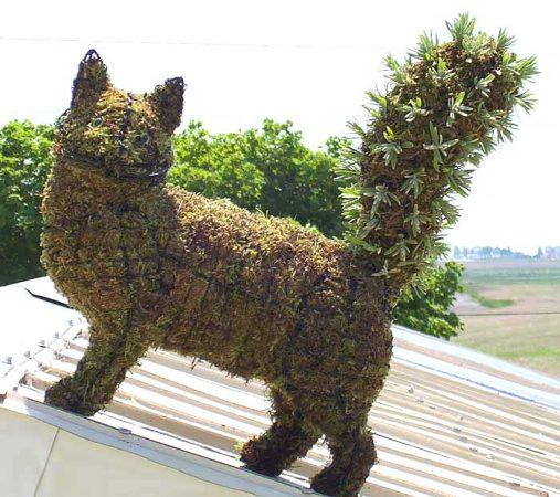 Кошка из травы
