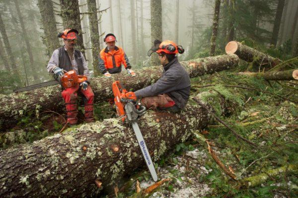 Спиливание деревьев бензопилой