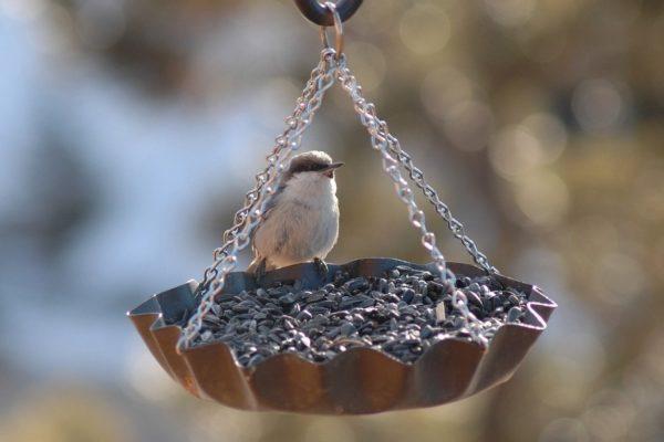 кормушка для птиц из формы для выпечки