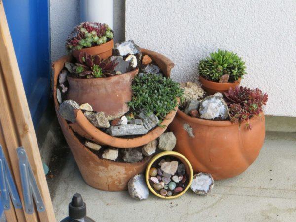 растения в разбитых горшках