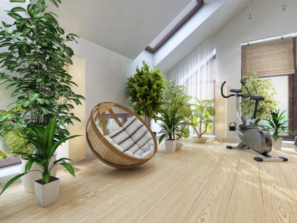 Живые растения в помещении