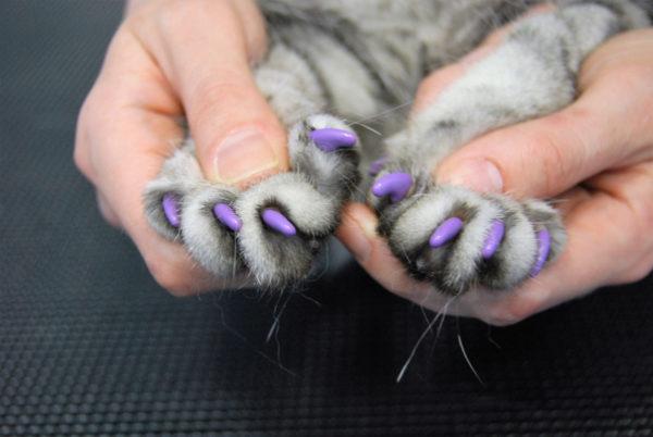 Защитные колпачки на лапах кошки