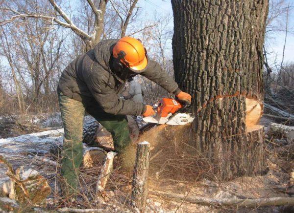 Рабочий пилит толстое дерево