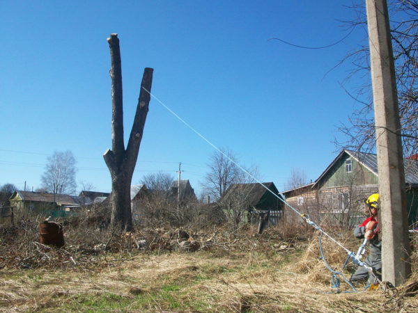 Техника спиливания дерева с оттяжкой
