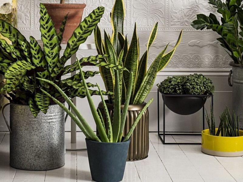 10 растений, которые увлажняют воздух в помещении