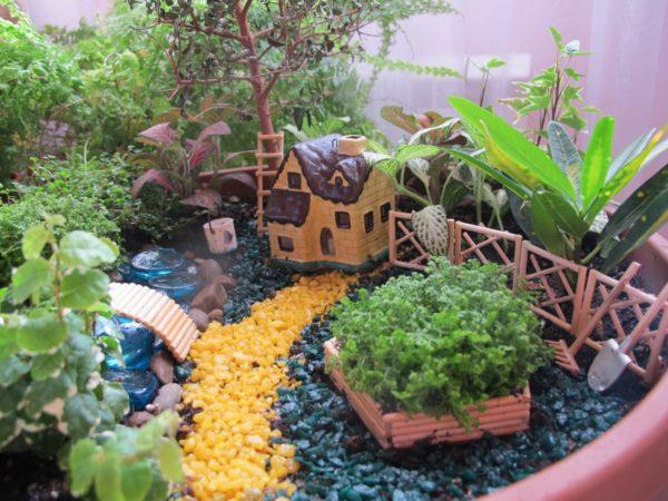 сад на подоконнике своими руками