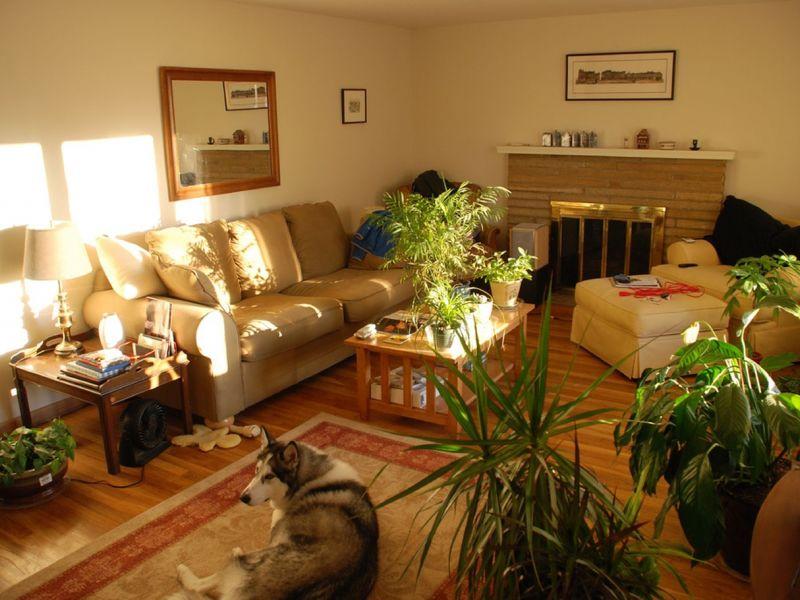 Где разместить комнатные растения: традиционные и необычные способы