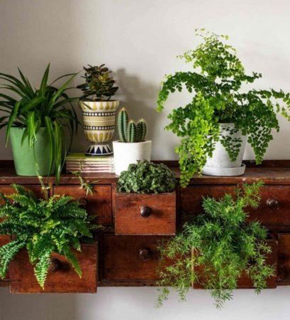 Комнатные растения на комоде