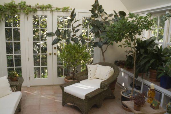 Большие комнатные растения в горшках на полу