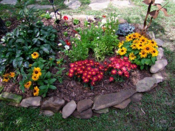 Клумба с разными цветами