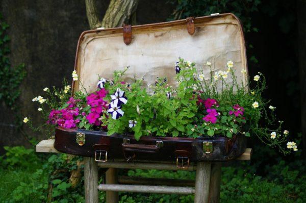 Клумба из старого чемодана