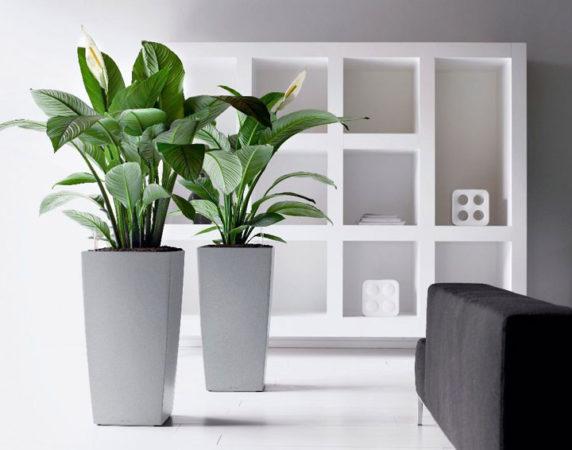 Растения в стильных горшках